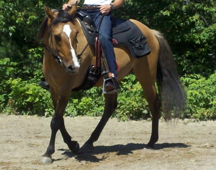Rider using the Free Ride - Western Safety Stirrup